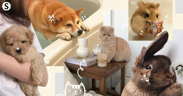 เลี้ยงสัตว์อะไรไว้เป็นเพื่อนแก้เหงาดี ?